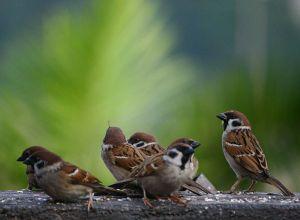 sparrowz